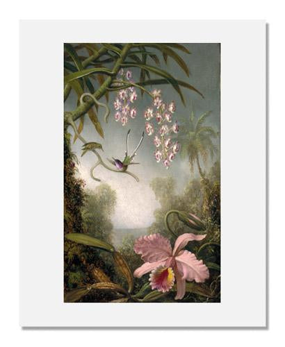 Martin Johnson Heade, Orchids and Spray Orchids with Hummingbirds