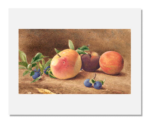 John William Hill, Study of Fruit