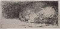 MFA Prints archival replica print of Rembrandt Harmensz. van Rijn, Sleeping Puppy from the Museum of Fine Arts, Boston collection.