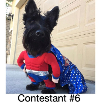 "It's a close race - any pup can win the ""Puppy Mama Best Halloween Dog Photo Competition"" Title!"