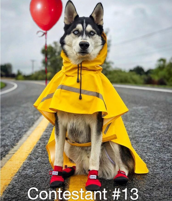 Congratulations to Kyzer the Husky - our 2017 Halloween Dog Contest Photo Winner!