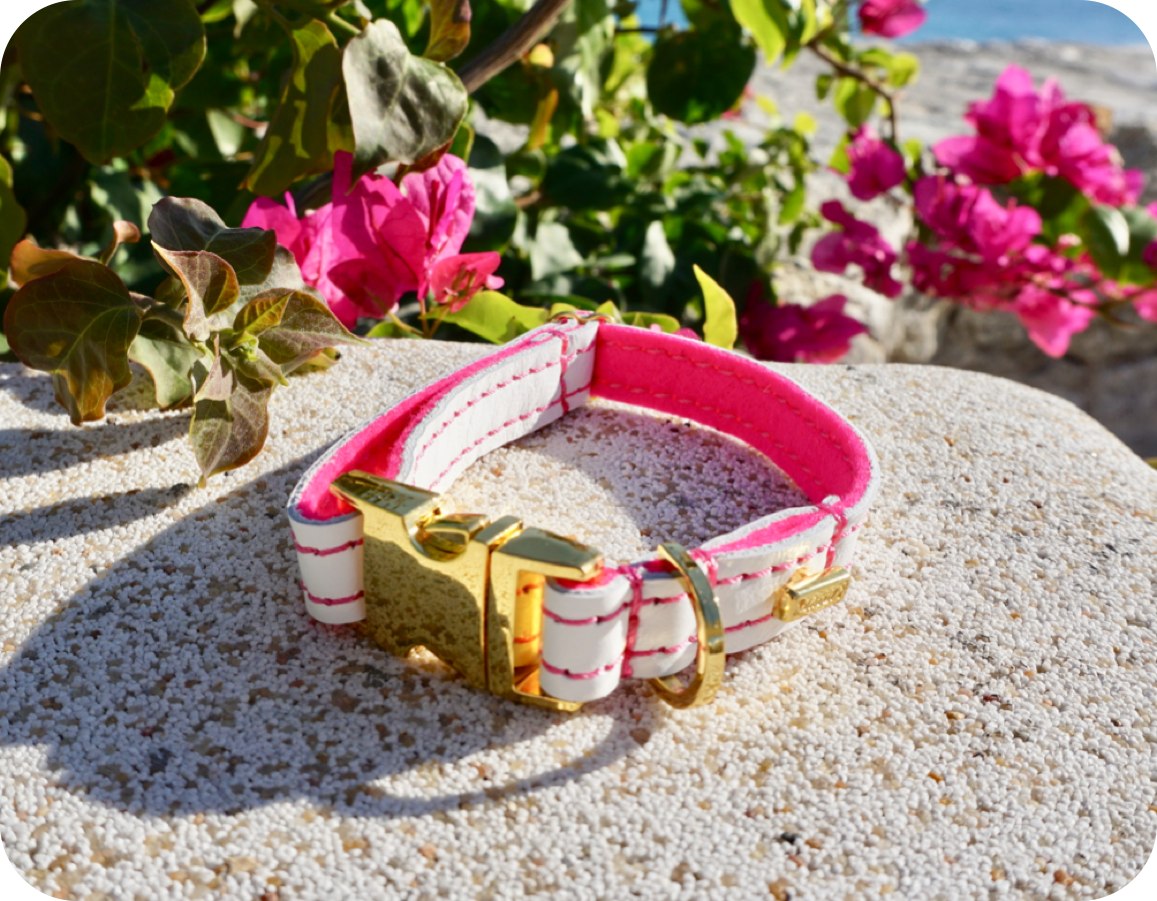 """The Tropics"" Dog Collar, Leash & Harness (buy together or separately)"