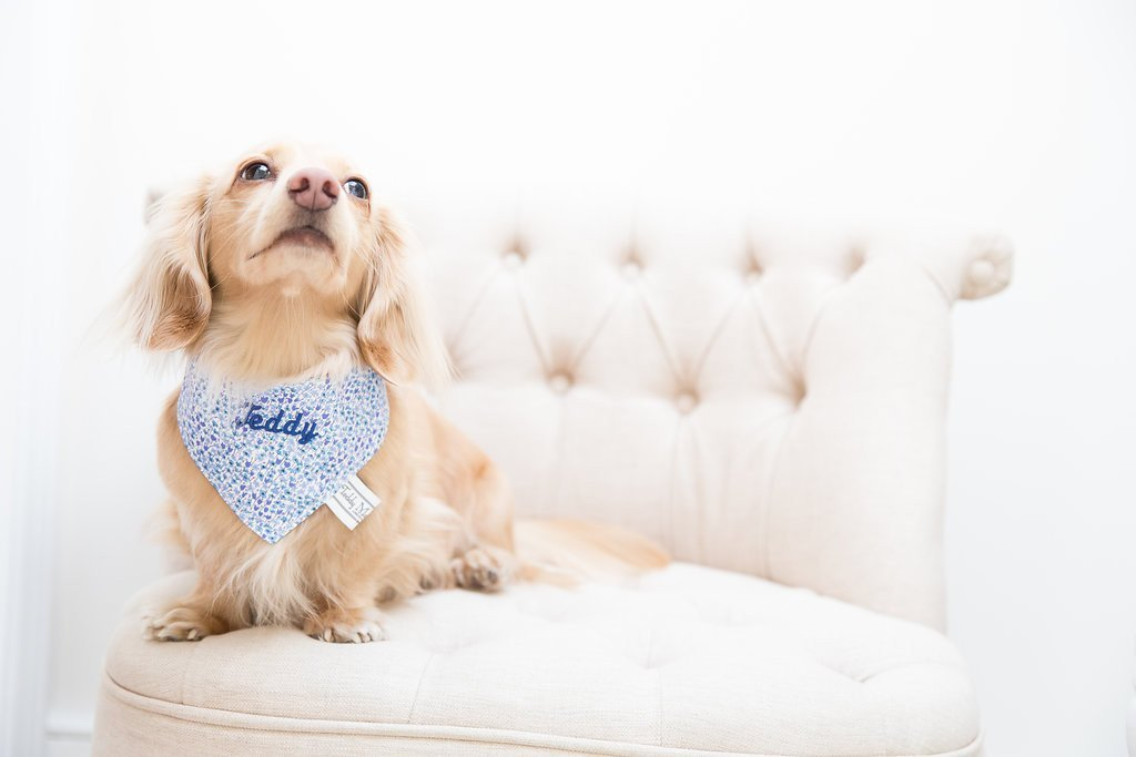 Sweet Blue Liberty Print Dog Scarf