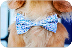 Sweet Blue Liberty Print Dog Bow Tie