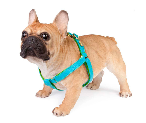 Turquoise Blue Leather Dog Harness  - Soft, Durable Leather and Soft Wool Lining