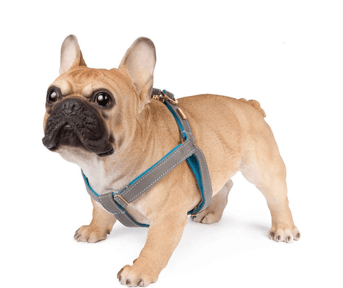 Zinc Soft Leather Dog Harness with Wool Felt Lining