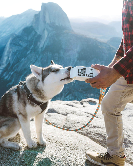 f08c60b05bc 5 Tips For Safe Outdoor Adventures With Your Dog