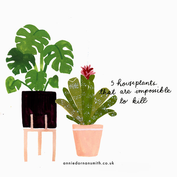 5 houseplants that are impossible to kill (hopefully) - Annie Dornan Smith