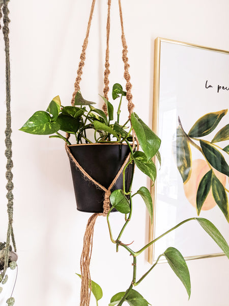 pothos in a hanging planter