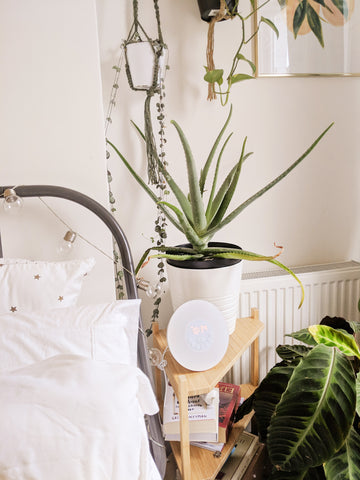 aloe vera on the bedside table