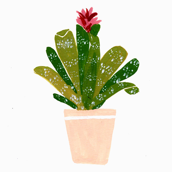 illustration of an aechmea plant