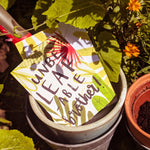 A plant-themed brother card tucked into a plantpot in the garden