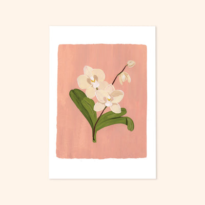 A print of an illustrated cream-coloured Orchids on a pink background.