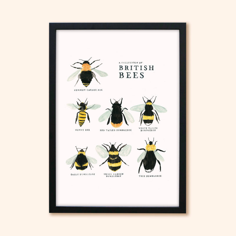 Illustrated British Bees Print - A3, A4