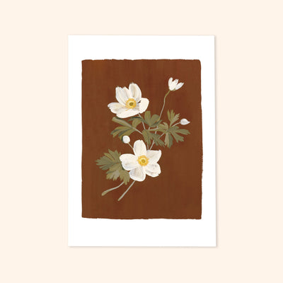 a print of an illustrated sprig of white Japanese anemones on a warm brown background