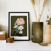 Paeonia - Illustrated Peony Floral Print - A3 - Annie Dornan-Smith Design