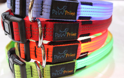 DFF Paw Prime's Rechargeable LED Collar V2