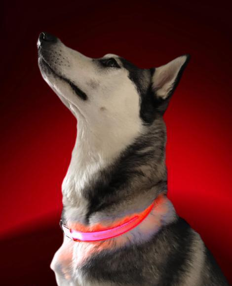 Paw Prime's LED Dog Collar