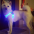 Paw Prime's LED Harness