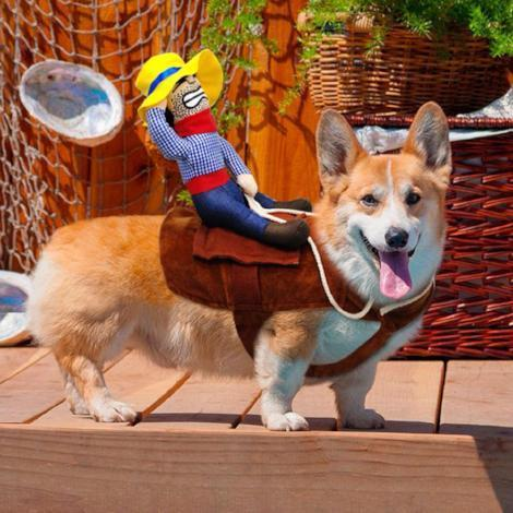 Paw Prime Riding Cowboy Costume