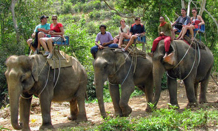 Get Off My back - Issues With Elephant Trekking