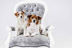 Cute Pet Photography - Exclusive Photography Perth/Brisbane