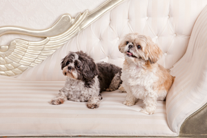 Tiffany & Chanel Pet Photography - Exclusive Photography Perth/Brisbane