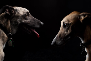Best Buds Pet Photography - Exclusive Photography Perth/Brisbane