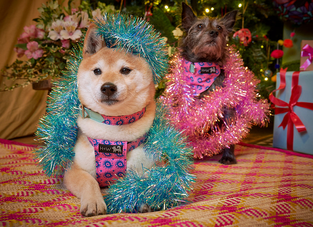 Hiro and Wolf in tinsel