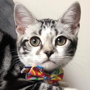 Over the Rainbow Cat Bow Tie