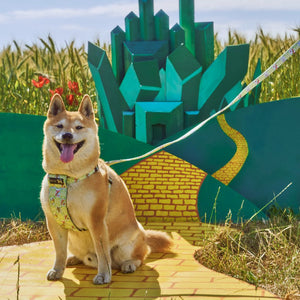 Emerald City Dog Harness