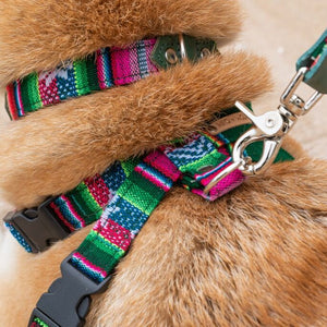 Inca Holly Dog Collar