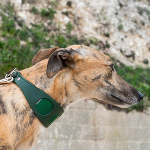 Inca Holly Hound Collar