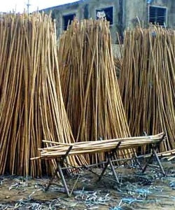 Processed Rattan into Reed Lengths