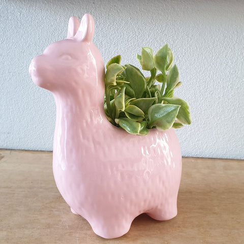 Alpaca Planter - Pink - The Chic Nest