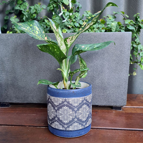 Aubrey Blue Patterned Planter (A)