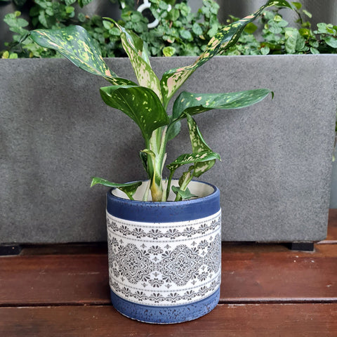 Aubrey Blue Patterned Planter (C)
