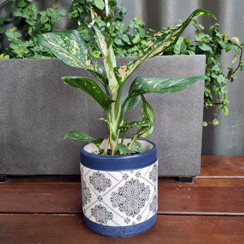 Aubrey Blue Patterned Planter (D)
