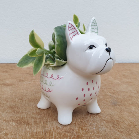 Bella Dog Planter