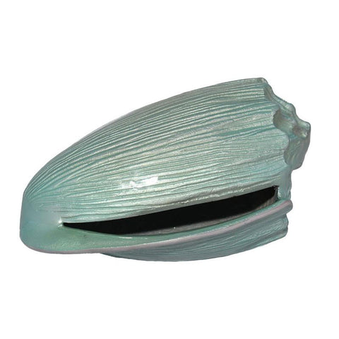 Blue Volute Shell