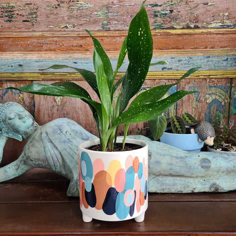Colourful Ceramic Footed Planter (A)