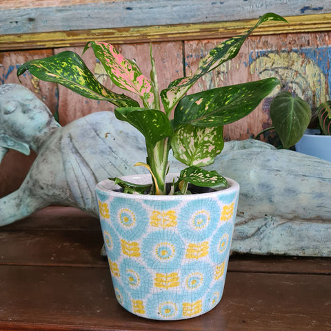 Daisy Ceramic Planter - Yellow & Aqua