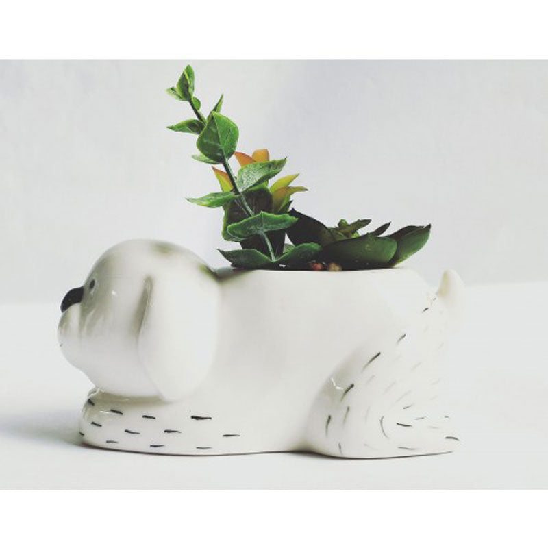 Dog Planter With Succulents