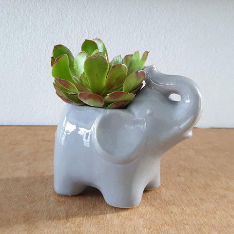 Grey Elephant Planter
