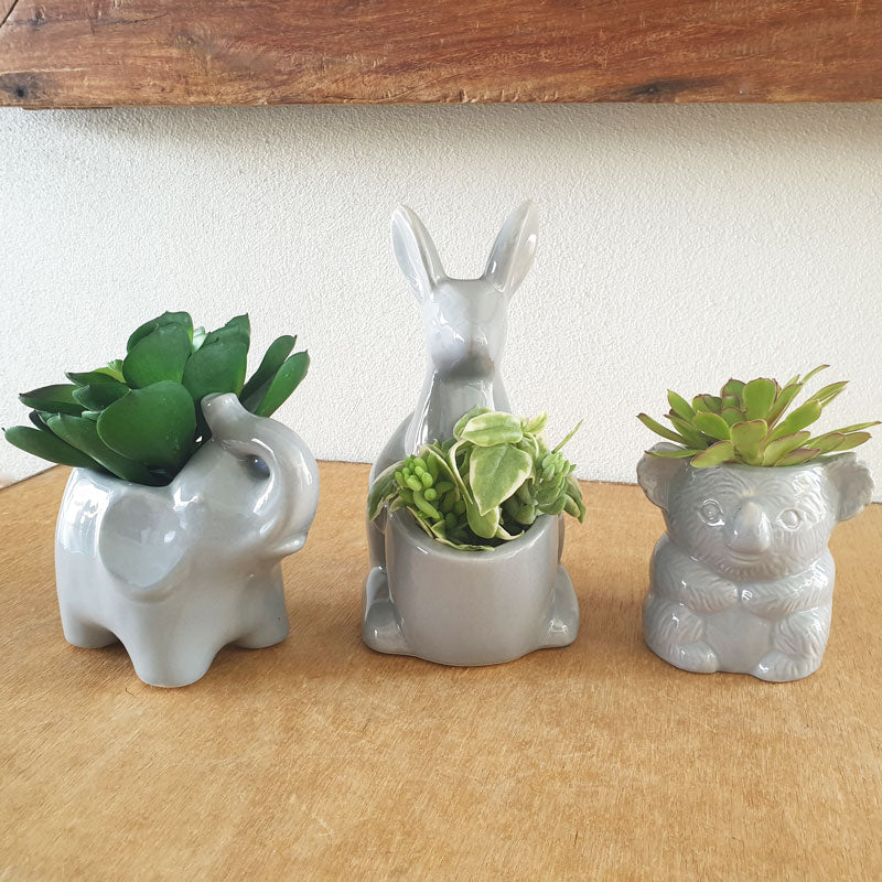Grey Kangaroo Planter