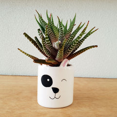 Little Dog Planter
