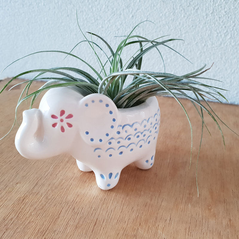 Little Elephant Planter