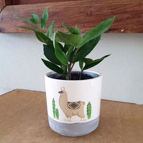 Llama Ceramic Planter Pot - Grey