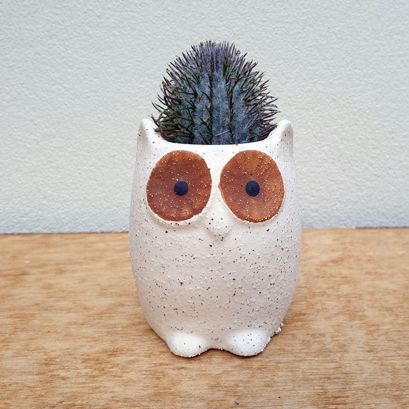 Natural Owl Planter