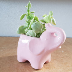 Pink Elephant Planter - The Chic Nest